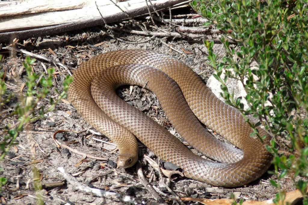 Home snakes: species. Care and maintenance