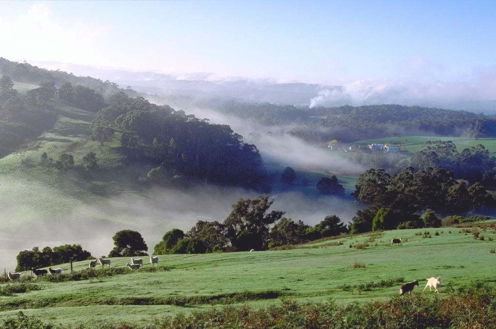 Rolling hills of the Otways